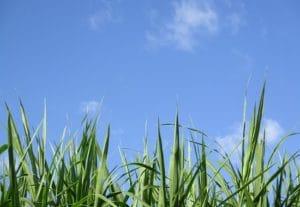 ciel bleu herbes